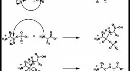 Biochemie Nachhilfe